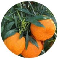 Bitter sinaasappelextract