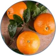 Bitteresinaasappel-fruitextract