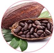Cacao zaad extract